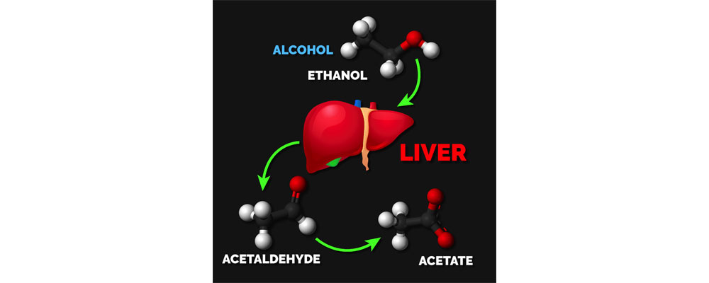 تاثیر الکل بر عضله