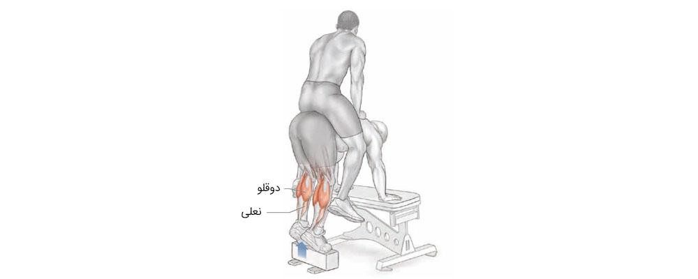 ساق پا کمکی
