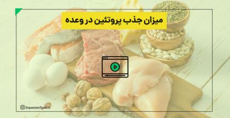 میزان جذب پروتئین در وعده های غذایی
